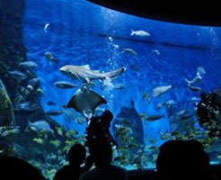 Aquarium of Western Australia