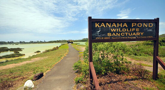 Kanaha Pond State Wildlife Sanctuary
