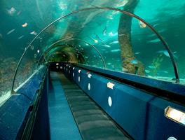 Acquario pubblico Kelly Tarlton's Sea Life